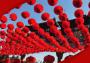 关于春节习俗的作文